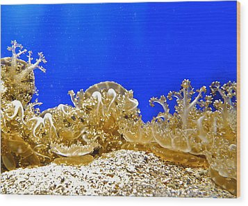Coral Like Golden Crowns Wood Print by Kirsten Giving