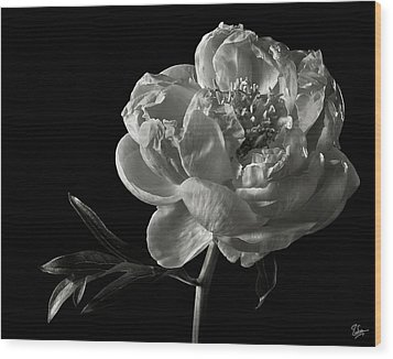 Wood Print featuring the photograph Coral Peony In Black And White by Endre Balogh