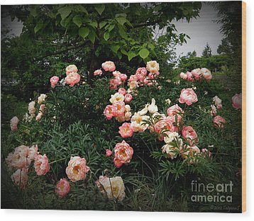 Wood Print featuring the photograph Coral Peony by Tanya  Searcy