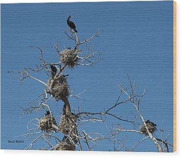 Cormorant Condos Wood Print by Stephen  Johnson
