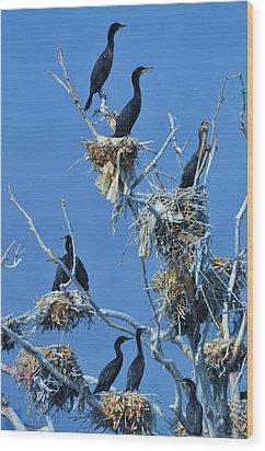 Cormorant Habitat Wood Print