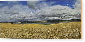 Corn Field Panorama Wood Print by Heiko Koehrer-Wagner