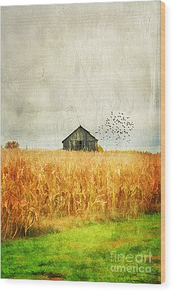 Corn Fields Of Kentucky Wood Print by Darren Fisher