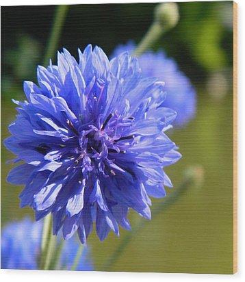 Cornflower Blue Wood Print by Sharon Lisa Clarke
