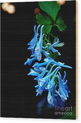 Corydalis  Wood Print