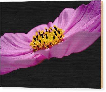 Cosmia Flower Wood Print by Sumit Mehndiratta
