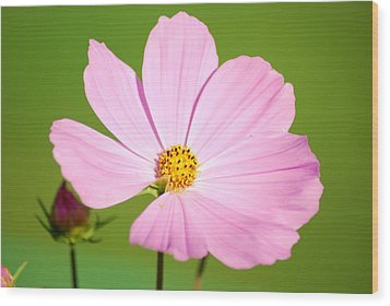 Cosmos And Bud Wood Print