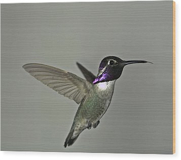Wood Print featuring the photograph Costas Hummingbird by Gregory Scott