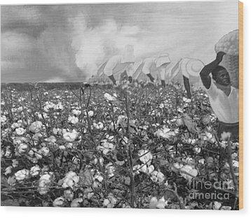 Cotton Field Wood Print by Belinda Threeths