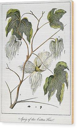 Cotton Plant, 1796 Wood Print by Granger