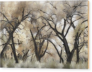 Cottonwood Trees Wood Print by Denice Breaux