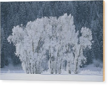 Cottonwood Trees With Frost Wood Print by Skip Brown