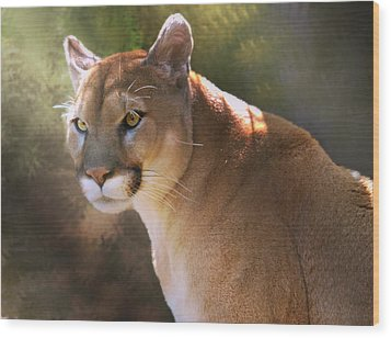 Wood Print featuring the digital art Cougar by Mary Almond