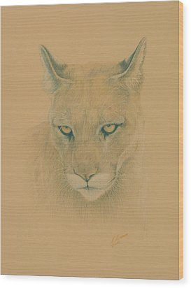 Cougar Wood Print by Norm Holmberg