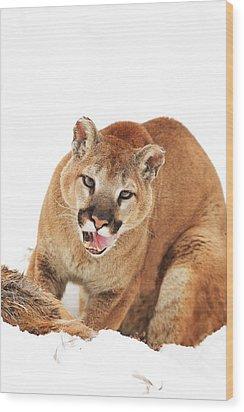 Cougar With Prey Wood Print by Richard Wear