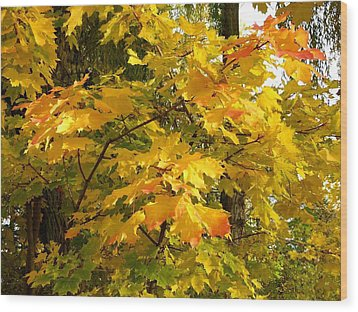 Country Color 10 Wood Print by Will Borden