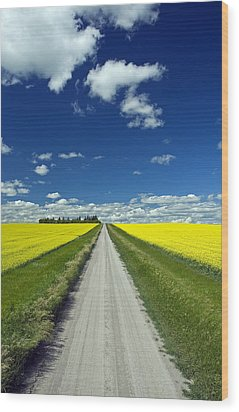 Country Road With Blooming Canola Wood Print by Dave Reede