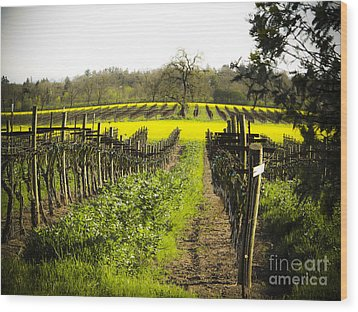 Wood Print featuring the photograph Country Roads by Leslie Hunziker