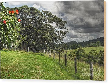 Countryside With Old Fig Tree Wood Print by Kaye Menner