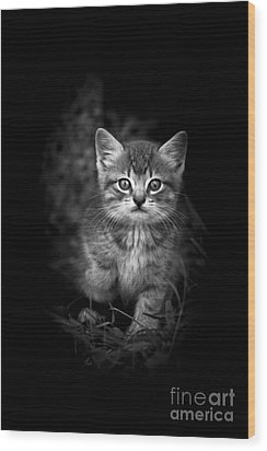 Courageous Wood Print by Kim Henderson