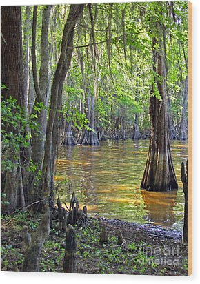 Cove At Caddo Lake Wood Print by Gayle Johnson