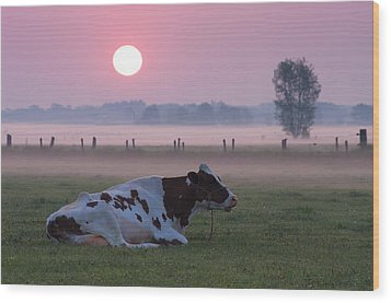 Cow In Meadow Wood Print by Hans Engbers