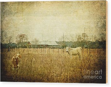 Cow Pasture Wood Print by Joan McCool