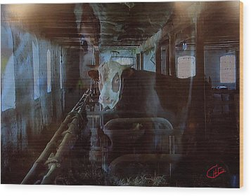 Cow Shelter Indoor Wood Print by Colette V Hera  Guggenheim