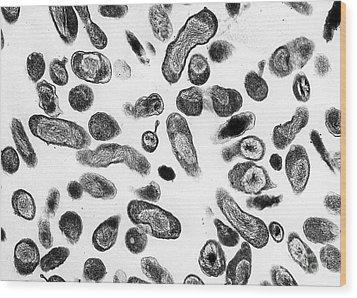 Coxiella Burnetii Bacteria, Tem Wood Print by Science Source