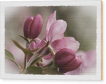 Crab Apple Blossoms II Wood Print