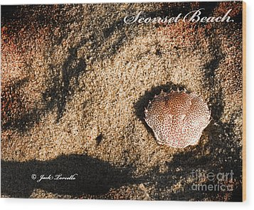 Wood Print featuring the photograph Crab Shell 'sconset Beach Nantucket by Jack Torcello