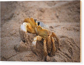 Wood Print featuring the photograph Crabby by Linda Mesibov