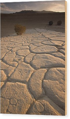Cracked Mud Lies On Top Of The Sand Wood Print by Phil Schermeister