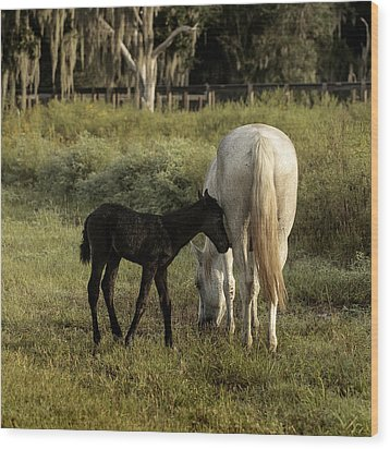 Cracker Foal And Mare Wood Print by Lynn Palmer
