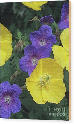 Cranesbill And Iceland Poppy Flowers Wood Print by Archie Young
