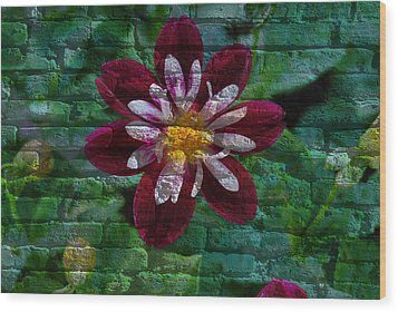 Crazy Flower Over Brick Wood Print