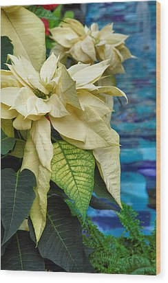 Creamy Poinsetta  Wood Print by Steven Ainsworth