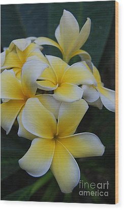 Creamy Yellow Flowers Wood Print
