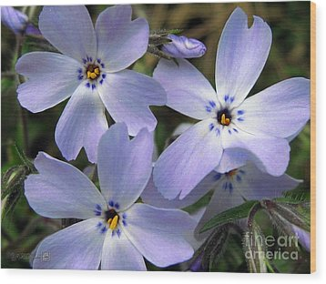 Wood Print featuring the photograph Creeping Phlox by J McCombie