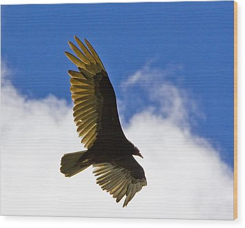 Crested Caracara Wood Print by Roger Wedegis