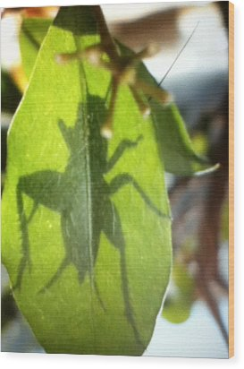 Cricket Shadow Wood Print