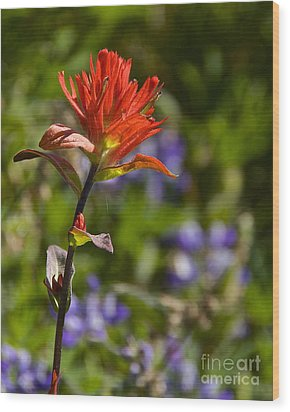 Crimson Paintbrush Wood Print by Sean Griffin
