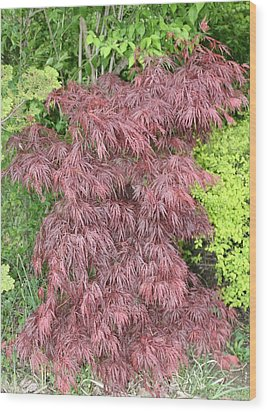 Crimson Waterfall A Japanese Maple Wood Print by James Collier