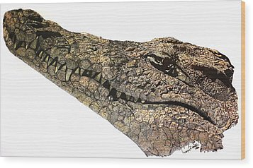 The Crocodile Wood Print