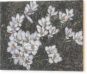 Crocus Flowers Wood Print by Robert Goudreau