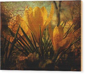 Crocus In Spring Bloom Wood Print by Ann Powell