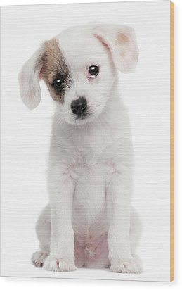 Cross Breed Puppy (2 Months Old) Wood Print by Life On White
