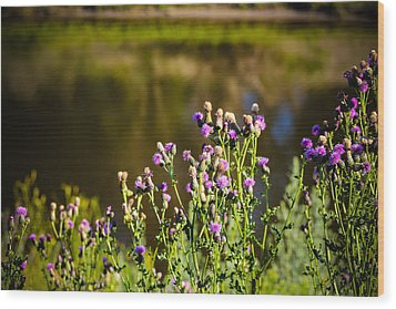 Crowd Of Purple Thistles Wood Print