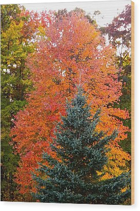 Crowning Glory Of Autumn Wood Print by Randy Rosenberger