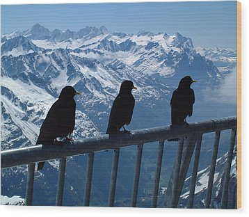 Crows On Top Of Mount Titlis Switzerland Wood Print
